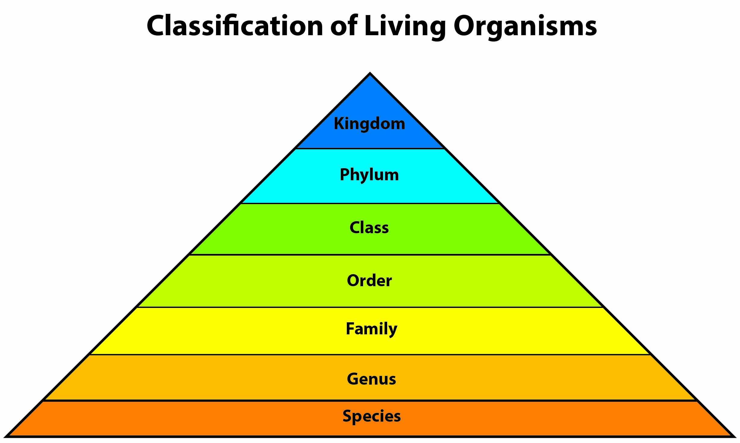 An overview of the classification of living organisms