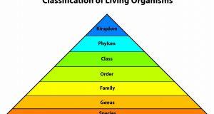 Class Of Living Organisms